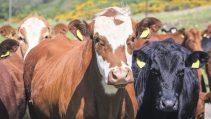 Genç çiftçi hibe projelerinde verilen hayvanlar