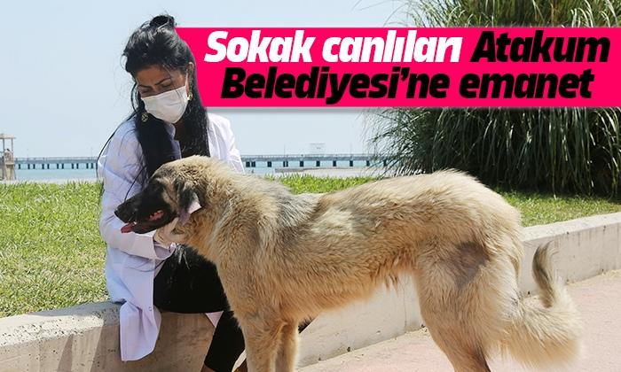 Atakum Belediyesi sokak canlılarının yardımına koşuyor