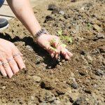 AtaTohum'da tohumlar yetişiyor üreticiyle paylaşılıyor