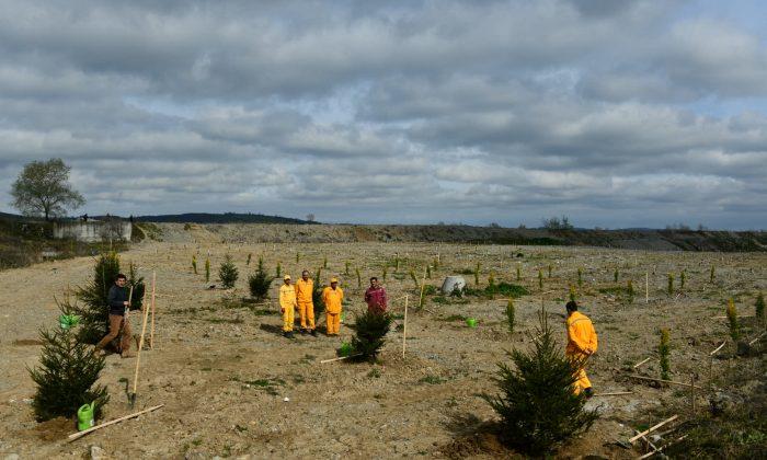 Bafra Organize Sanayi Bölgesi 100. Yıl Kurtuluş Ormanı'nda 1919 Fidan Toprakla buluştu