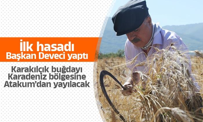 Karakılçık üretim sahasında ilk hasadı Başkan Cemil Deveci yaptı