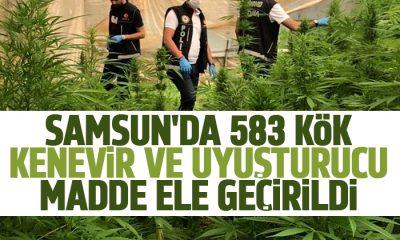 Samsun'da 583 kök kenevir ve uyuşturucu ele geçirildi