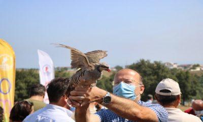 Samsun'da doğaya sülün ve kınalı keklik salındı