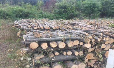 Samsun'un Salıpazarı ilçesinde Orman Katliamı mı Yapılıyor?