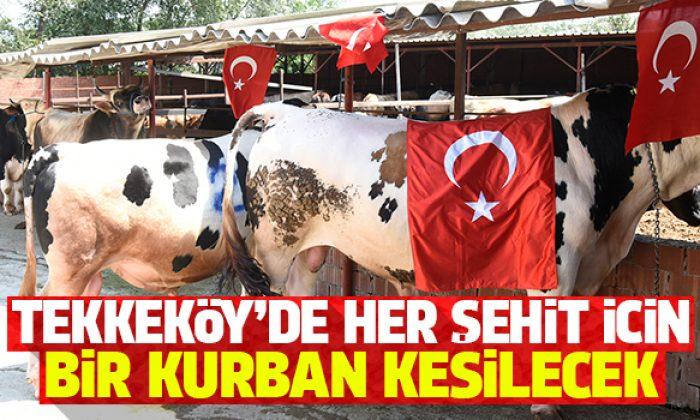 Kurban bayramında Tekkeköy'de her bir şehit adına kurban kesilecek