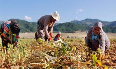 Tatilcilere Verilen Kredi Çiftcilere Verilecek mi?