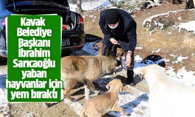 Başkan Sarıcaoğlu yaban hayvanlar için yem bıraktı