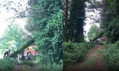 Terme'deki Aşk Tüneli'ndeki ağaçları kestiler