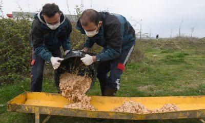 Samsun Büyükşehir Belediyesi, Sokak hayvanlarına 47 ton mama dağıtıldı