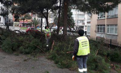 Kesilen ağaç dalları çevre düzenlemesinde kullanılıyor
