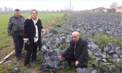 Hancıoğlu, iktidarın tarım politikasını Bafra'dan eleştirdi