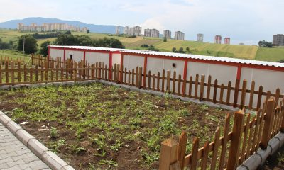 Taşçı: Hobi Bahçeleri hayat kurtaracak