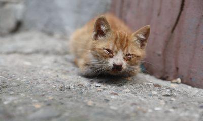 İlkadım belediyesi'nden yavru kedi ve annesine ambulans hizmeti