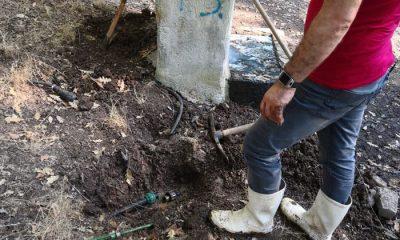 Osman Genç idaresindeki Canik Belediyesi Meşe tesislerinin suyuyla bütün ormanı sulamış