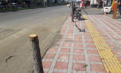 19 Mayıs Aytemiz Petrol'den Ağaç Katliamı