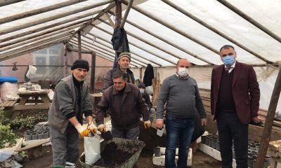 Salıpazarı'nda belediyeye ait seralarda kışlık çiçek hazırlıklarına başlanıldı