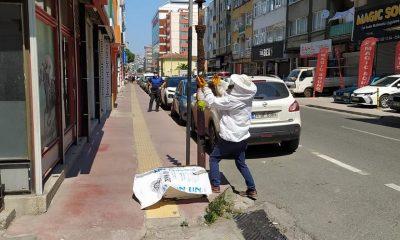 Şehre inen arılara zabıta ekipleri müdahale etti